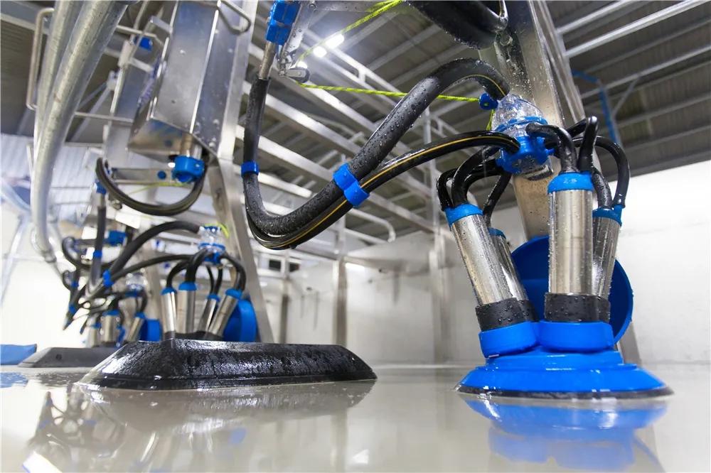 Dariymaster转盘式挤奶机杯组反冲洗系统